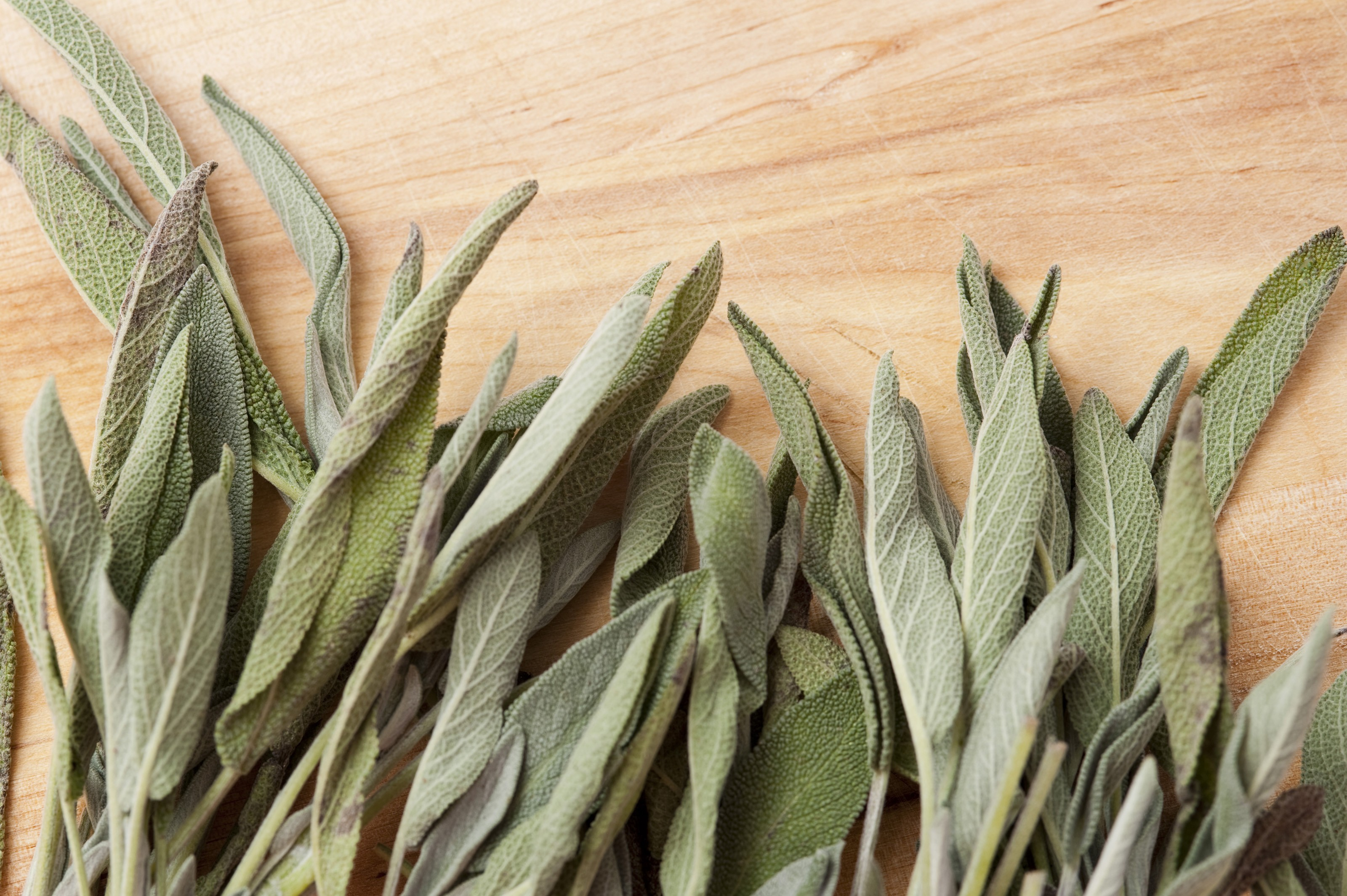 Closeup of fresh sage leaves